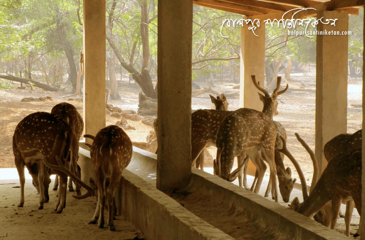 Ballavpur Wildlife Sanctuary (Deer Park)